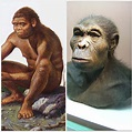 The genus Homo and The Evolution of Modern Humans from ...