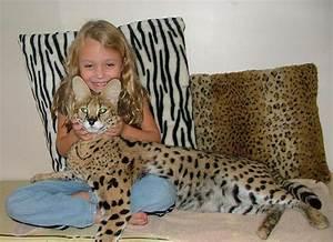 serval | Kate's Corner