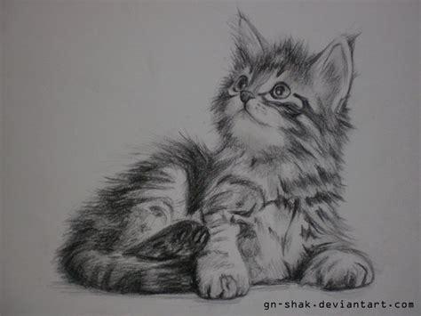 siberian kitten  gn shak  deviantart