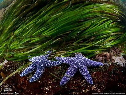 Geographic National August Animal Amazing Sea Creature