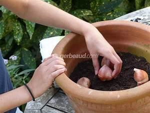 Planter Des Bulbes : planter des bulbes en pot avec les enfants ~ Dallasstarsshop.com Idées de Décoration