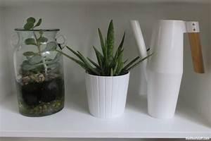Aloe Vera Ikea : ikea live lagom my new sustainable lifestyle the progress ~ Preciouscoupons.com Idées de Décoration