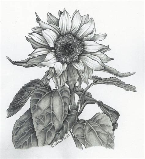 trippy sunflower pencil drawings sunflower  behance