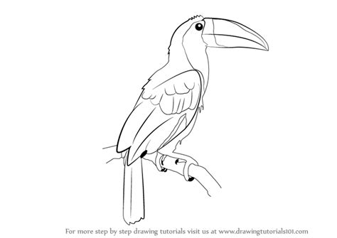 toucan body template learn how to draw a toucan birds step by step drawing
