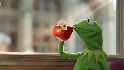 Kermit Tea Costume Meme Memes Halloween Uri