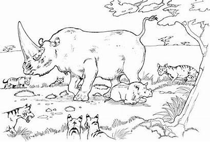 Coloring Rhino Pages Rhinoceros Jungle Animal Habitat