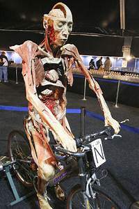 Leg Muscles Used In The Cycling Pedal Stroke