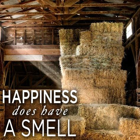 my stinks and sheds a lot 17 best ideas about country on farm