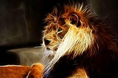 Lion Wallpapers Desktop Background Pretty Animals Hdwallpaper
