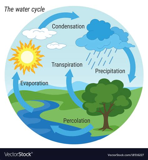 Water Cycle Images Water Cycle Colour Royalty Free Vector Image Vectorstock