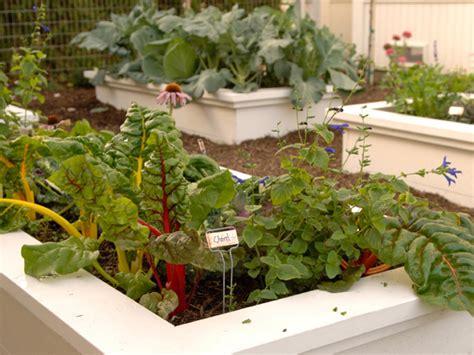 plants for garden beds selecting plants for a tropical garden hgtv