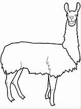 Llama Coloring Drawing Lama Clipart Cartoon Para Colorear Clip Head Printable Colouring Crafts Vbs Animal Dibujos Printables Animals Alphabet Alpaca sketch template
