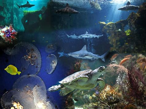 l aquarium la rochelle cr 233 ation nicolas aquarium de la rochelle paperblog
