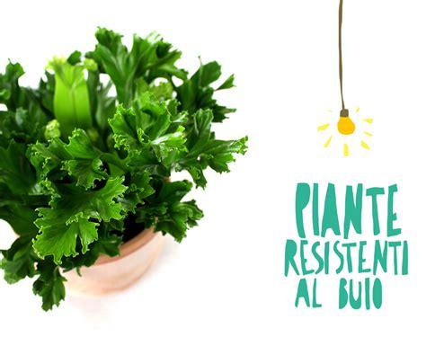 piante da interno con poca luce possono le piante da appartamento vivere con poca luce si