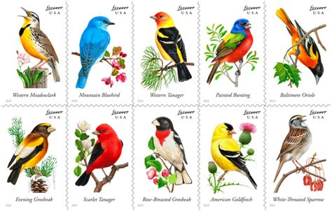 what are the different types of singing birds what are