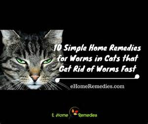 how to get rid of worms in cats 10 simple home remedies for worms in cats