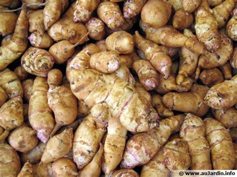 cuisiner topinambour topinambour helianthus tuberosus conseils de culture
