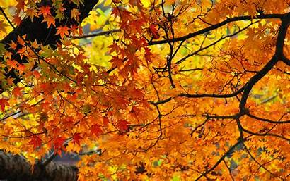 Fall Autumn Leaf Foliage Ever Branch Boston