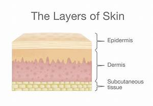 Skin  Structure And Function Explained