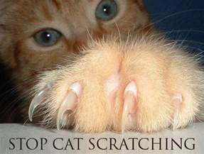 how to get a cat to stop scratching how to stop a cat from scratching furniture animals