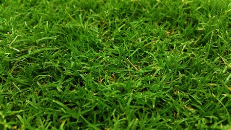 Keep Your Lawns Green This Winter