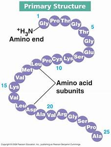 Amino Acids And Proteins Part 2