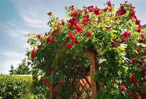 Garten Gestalten Cottage by Einen Stilechten Cottage Garten Anlegen Tipps Haas