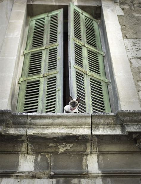 Exterior Window Ledge by 4572 Best Cats Gotta Fur Babies Images On