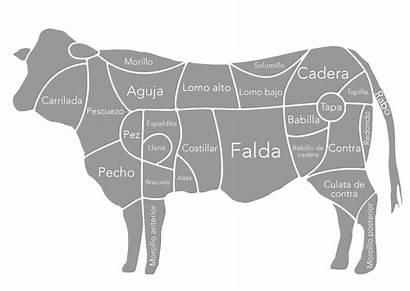 Vaca Carne Vacuno Piezas Partes Como Imagenes