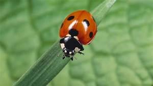 Garten Schädlinge Bekämpfen : tierische bio waffen bek mpfen sch dlinge b z berlin ~ Michelbontemps.com Haus und Dekorationen