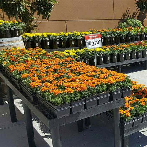 walmart garden center walmart supercenter 13425 community road poway ca 92064