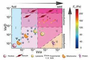 How Cytoplasm  U0026 39 Feels U0026 39  To A Cell U0026 39 S Components