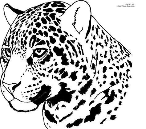 jaguar coloring pages kidsuki