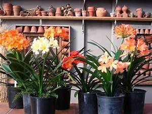 Büro Pflanzen Pflegeleicht : zimmerpflanzen pflegeleicht und auch f r anf nger geeignet 40 bilder ~ Michelbontemps.com Haus und Dekorationen