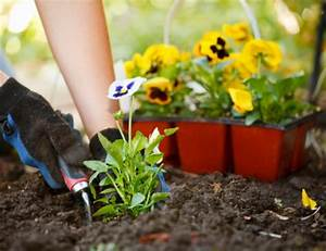 Planting 101 understanding the basics of growing a garden for Garden planting