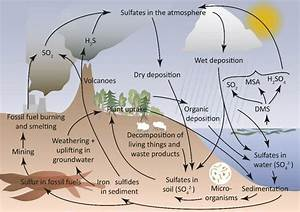 Schematic Figure Of The Sulfur Cycle
