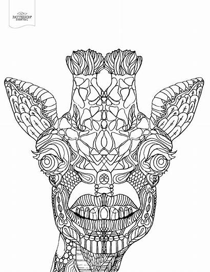 Coloring Pages Giraffe Adult Printable Toothy Dental