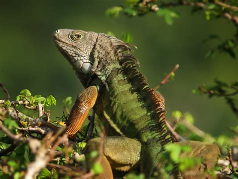Most popular exotic pets are most likely to be dumped in ...