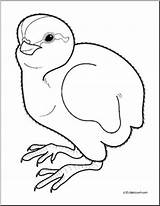Quail Coloring Baby Clip Animals Cheeper Abcteach Animal Clipart Line Preview sketch template