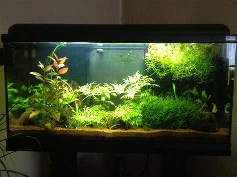 aquarium aquadream 80 betta unimaculata tawau par scarcore
