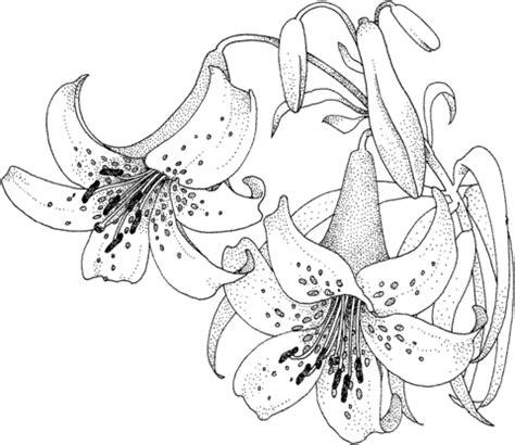 dessin de fleur de lys