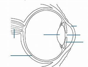 Anatomy  Eye Diagram To Label