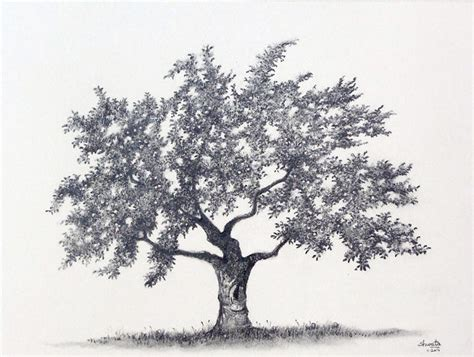 realistic apple tree drawing 25 pencil drawings ideas design trends premium