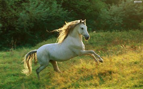 pony horse desktop backgrounds