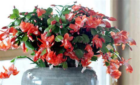 unbedenkliche pflanzen für katzen die giftigsten zimmerpflanzen f 252 r katzen mein sch 246 ner garten