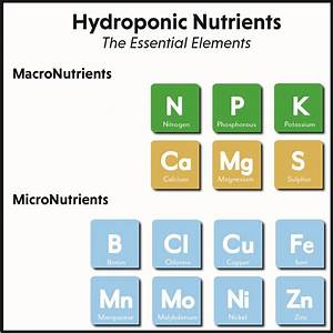 The Essential Elements Of Hydroponic Nutrients