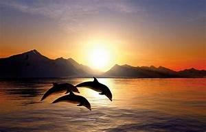 Schöne Delfin Bilder : delfin bilder ~ Frokenaadalensverden.com Haus und Dekorationen