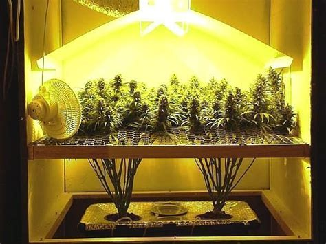 le quot oui quot massif au cannabis inqui 232 te l onu openminded