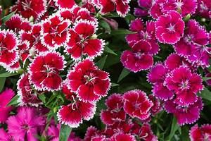 19 Perennial Flowers For Sun  Gorgeous
