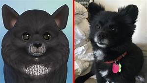 Sims 4 Cats And Dogs Making Our Pets Artistry In Games